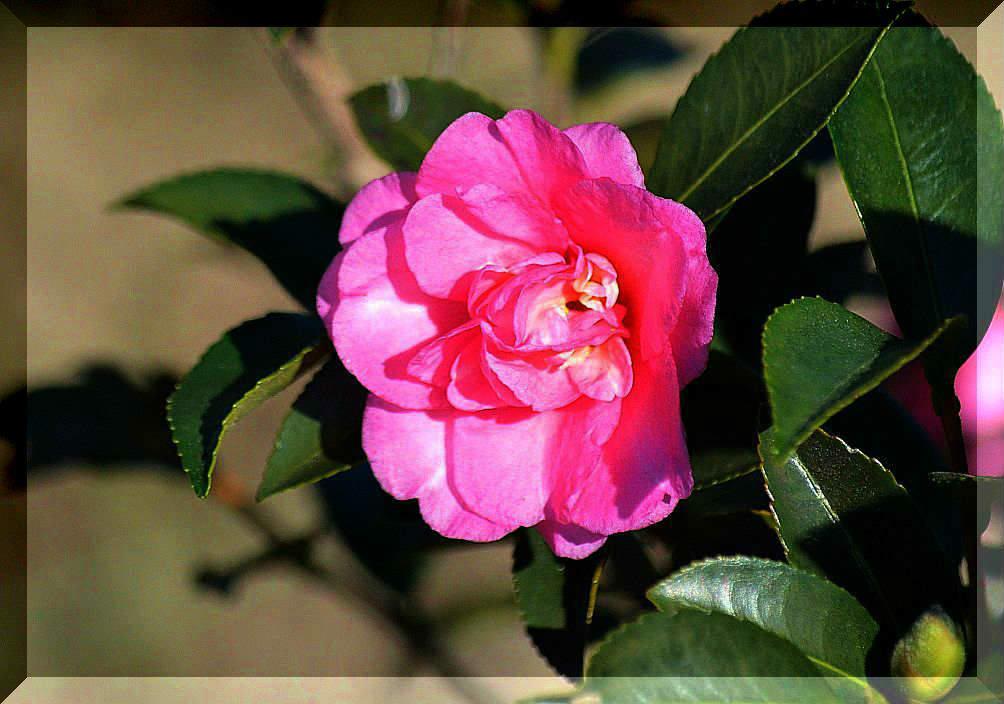 花あかりの画像掲示板の画像